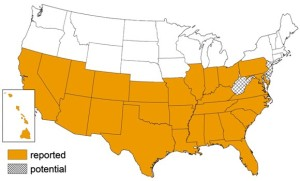 map of the United States showing where Triatomine bugs have been ___(1)