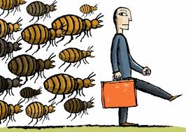 bedbugs_working