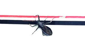 Love_Bug