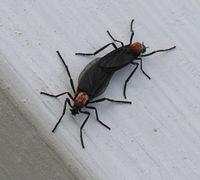 200px-Lovebugs