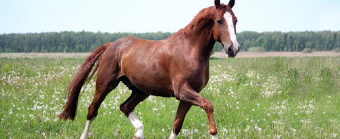 Horses_Chagas.jpg