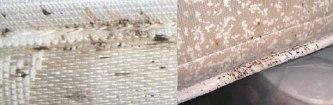 mattress_with_bedbugs