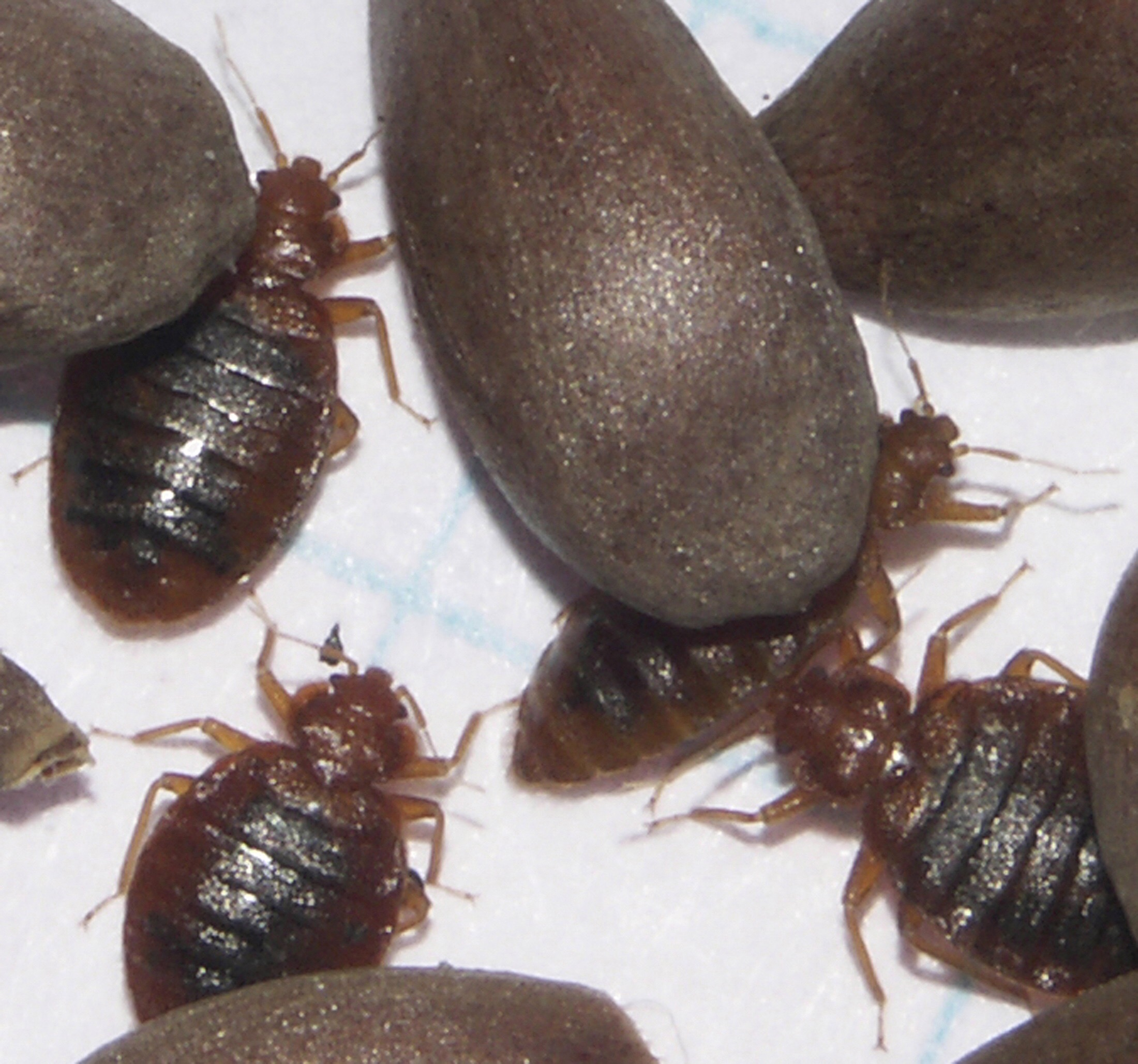 Live Free Bed Bug Blog Report