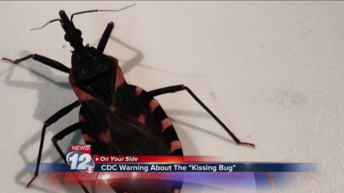 kissing-bug-disease
