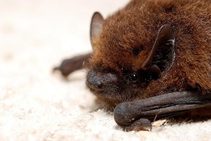 bat-houses-miami-beach