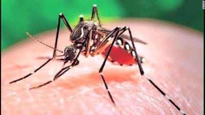 160128185001-zika-mutant-male-mosquitos-mclaughlin-pkg-00020830-exlarge-tease