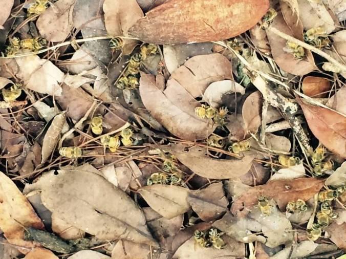 Bees1-Sept10.jpg
