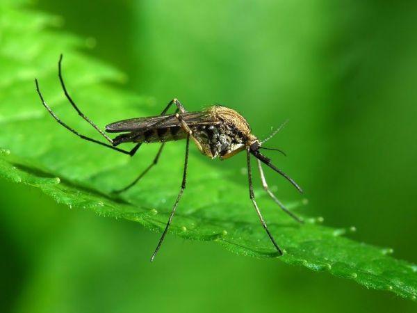 mosquito_2_shutterstock_90471127-1475611699-2573