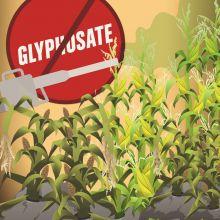 ewg_glyphosate