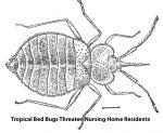 Bed_Bugs-150x123.jpg