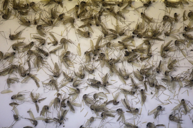 170414-zika-virus-feature