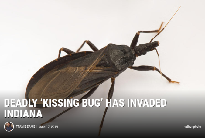 Deadly_Kissing_Bug.PNG
